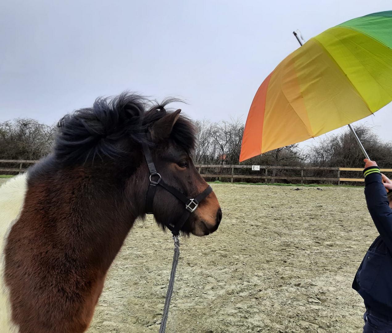 praktijk hip kindercoach met paarden